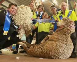 CTY-0003420 © WestPix WA College of Agriculture, Cunderdin students Danny Halligan, Grace Davy, Kiden Johnston, Jadan Smith and Shannon McLean were the team winners of the RAS Young Sheep Producers Challenge. Picture: Bob Garnant