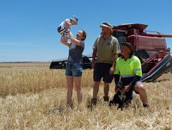 CTY-0003493 © WestPix Tamara Carter and Neil Carter, with Neil's father Rod, baby Aiden and dog Pugs, were last week harvesting barley, which was acheiving good results despite some small frost damage. If Aiden chooses to pursue farming, he will be the sixth generation on the Meckering farm. Picture: Jenne Brammer