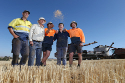 CTY-0003509 © WestPix The O'Driscoll family, of Northam, wrapped up their 2016 harvest program on the afternoon before widespread rain across the State. From left; Damian O'Driscoll, Tim O'Driscoll, Bailey O'Driscoll (13), Jaxon O'Driscoll (18) and Glen O'Driscoll. Picture: Justin Benson-Cooper