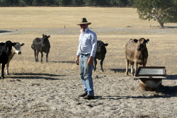 CTY-0003512 © WestPix Former WAFarmers president and Murray Grey cattle farmer Dale Park at his Badingarra farm. Picture: Rueben Hale Countryman