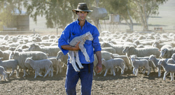 CTY-0003880 © WestPix Dandaragan sheep farmer Hugh Roberts is worried he will run out of feed stock for his ewes and lambs within a couple of weeks due to the dry winter.  Picture: Steve Ferrier The West Australian.