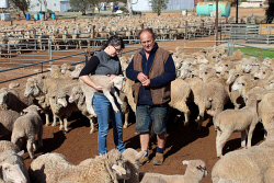 CTY-0003948 © WestPix Carnamah farmer Cameron Levett and Sanny Levett are preparing to destock the farm of their 7200 sheep after barely getting a drop of rain since summer. Picture: Rueben Hale
