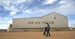 CTY-0003975 © WestPix Assistant farm manager Sandra Dormont walks past inspirational Chinese graffiti painted on one of the sheds at Connemara farm Lake King. 20th Nov 2013 Picture by Steve Ferrier / The West Australian.