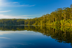 FAR-0007226 © WestPix Trees reflected in a lake at Beedelup. Picture: Farhad Mobarra