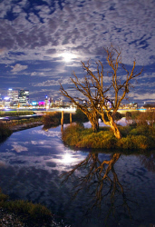 FEA-0007273 © WestPix Millers pond South Perth.Picture: Shaun Fearn
