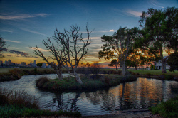 FEA-0007280 © WestPix Small pond in South Perth at sunrsie. Picture: Shaun Fearn