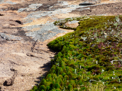 KGM-0025720 © WestPix Moss gardens at Boondi Rocks. Picture: Rebecca Nadge