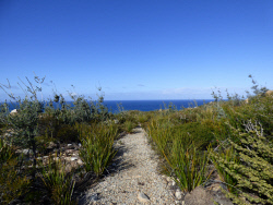KGM-0026077 © WestPix A pleasant trail off the Mount Barren Lookout. Picture: Rebecca Nadge