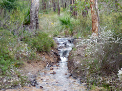 KGM-0026435 © WestPix A small brook in John Forrest National Park. Picture: Rebecca Nadge