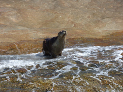 KGM-0030450 © WestPix The sea lion looked happy to see us. Picture: Rebecca Nadge