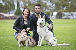 KGM-0031992 © WestPix Charlotte Hills and Ethan Day with their Australian miniature pig Rollo whose ear was cut off by an intruder and Merlot their white german shepherd who was fortunately unharmed. (Picture: Louise White) 1st May 2017