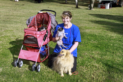 KGM-0032494 © WestPix Million Paws Walk.  Picture: Mary Meagher. Moya Sharp with 'Lucy','Mo' and 'Daisy'.