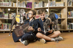 SUN-1401225 © WestPix Helping paws: Greyhounds, Rush (yellow jacket) and Boots (in blue), with Woodvale Secondary College students Shannon Castine and Cameron Hepworth. Picture: Ross Swanborough.