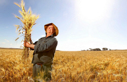 TWA-0002471 © WestPix Northampton grain farmer Chris Hasleby will be start harvesting within the month. The 2011-12 harvest could be a record breaking harvest especially around Geraldton.  Pic by Astrid Volzke 12th October 2011 The West Australian/ AND