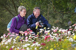 TWA-0053622 © WestPix German tourists (L) Sandra and Martin Graetz enjoying the spring wildflowers in bloom at Kings Park today. Picture: Megan Powell The West Australian.