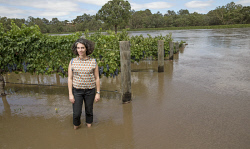 TWA-0063937 © WestPix Upper Reach Vineyard in Baskerville has had much of their vines covered by the flood waters. Owner Laura Pearse stands amongst the vines. Picture: Steve Ferrier The West Australian.