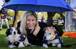TWA-0069200 © WestPix Adele Parker of Ferndale came well prepared for the wet weather when she and her pet dogs, Diesel, left, a miniature black and white sheep dog and Jim, a jack russell cross red heeler, participated in the Million Paws Walk in South Perth today, Sunday. PICTURE: NIC ELLIS   THE WEST AUSTRALIAN
