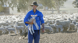 TWA-0070982 © WestPix Dandaragan sheep farmer Hugh Roberts is worried he will run out of feed stock for his ewes and lambs within a couple of weeks due to the dry winter.  Picture: Steve Ferrier The West Australian.