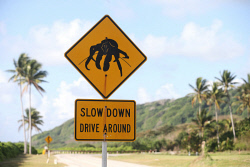 TWA-0070989 © WestPix 'Slow Down Drive Around' signs are found along the road in Christmas Island in an effort to reduce the number of robber crabs hit by cars. Christmas Island travel feature. 12 JUNE 2017 Picture: Danella Bevis The West Australian