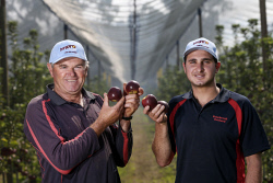 TWA-0073882 © WestPix Polybrook Orchard father son duo Steven Giumelli and Shaun Giumelli amongst their some 4000 apple trees in Donnybrook, with a new apple variety, Bravo (TM). It is expected to hit markets late April/early May. Picture: Simon Santi The West Australian