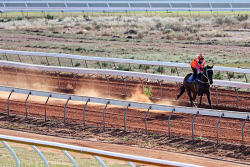 WAN-0011886 © WestPix Morning track work at Kalgoorlie Boulder Racing Club: Friarday is ridden by Eliza Finger. Pic: Michael Wilson, The West Australian, 18th September 2014.