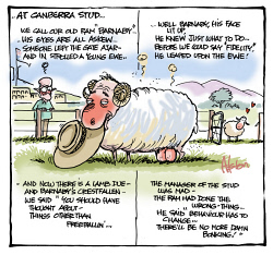 "DEA-0008043 © WestPix Dean Alston cartoon. At Canberra Stud...  We call our old ram ""Barnaby""..... His eyes are all askew.... Someone left the gate ajar.... and in strolled a young ewe.... Well Barnaby, his face lit up, He knew just what to do..... Before we could say ""Fidelity"", He leaped upon the ewe!..... And now there's a lamb due - and Barnaby's crestfall"
