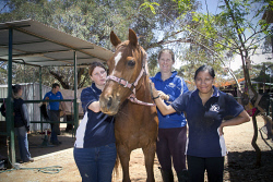 KGM-0036363 © WestPix Eastern Goldfields Education Support Centre at Picadilly Riding Centre.  Angel Malloch 17, 'Allure', Sabrina Watts and Atiria Rigby 17.  Picture: Mary Meagher.