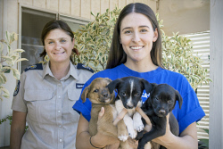 KGM-0036841 © WestPix RSPCA general Inspector Fiona Brown and volunteer Steph Guerin with puppies 'Margot', 'Ledger' and 'Benita'.  Picture: Mary Meagher.