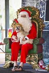 KGM-0037422 © WestPix Santa Paws at Rotary Peace Park, Oscar with Santa. (Picture: Louise White) 10th December 2017