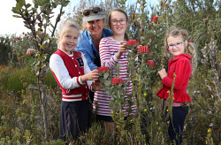 SUN-1403286 © WestPix The 2017 Ravensthorpe Wildflower Show is kicking off this weekend in and around the Fitzgerald National Park with some of the most spectacular wildflowers on display in the area. Pictured is wildflower show picker co-ordinator Donna Higgins and young wildflower hunters Isla Hillier (6), Heidi Hillier (8) and Winter Hillier, (5) with Scarlet Bankias near Hope