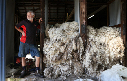 "SUN-1404391 © WestPix Scenes in a shearing shed in Witchcliffe, just past Margaret River. Pictured - Leo ""The Legend"" Kelly, retired farmer, wool classer. Picture: Daniel Wilkins"