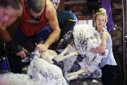 SUN-1404400 © WestPix Scenes in a shearing shed in Witchcliffe, just past Margaret River. Pictured - Hayley Barker (17). Picture: Daniel Wilkins