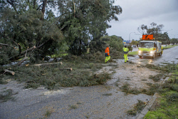 TWA-0036122 © WestPix Workers clear the fallen tree on Canning Hwy, Melville this morning. 14th July 1014 Pic by Steve Ferrier / The West Australian. **  **