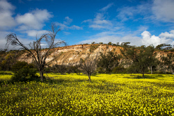 TWA-0051700 © WestPix Wildflowers in full bloom at Coalseam Conservation Park near Mingenew and Mullewa. Pic Mogens Johansen, The West Australian