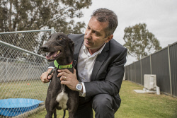 TWA-0078222 © WestPix Minister Paul Papalia is pictured with dog Jake at the Greyhounds as Pets Adoption Facility. Photo by Michael Wilson, The West Australian.