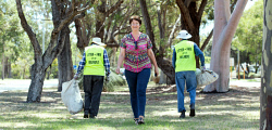 TWA-0085296 © WestPix Redcliffe resident Bella Scharfenstien walks amongst the trees on Brearley Ave, while other locals clean up litter.  Picture: Steve Ferrier The West Australian.