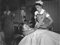WAN-0019116 © WestPix NURSES AND CHILDREN WITH LION CUBS AT PRINCESS MARGARET HOSPITAL ON CHRISTMAS DAY.