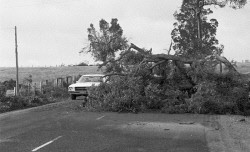 WAN-0031867 © WestPix NEG FILE WG 2630 D - storm damage. 5 April 1978. Picture: Ron D'Raine  The West Australian
