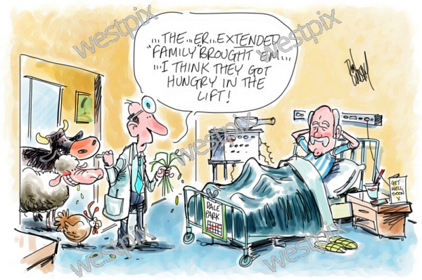 Don Lindsay Cartoon Man Lying In Hospital Bed | WestPix